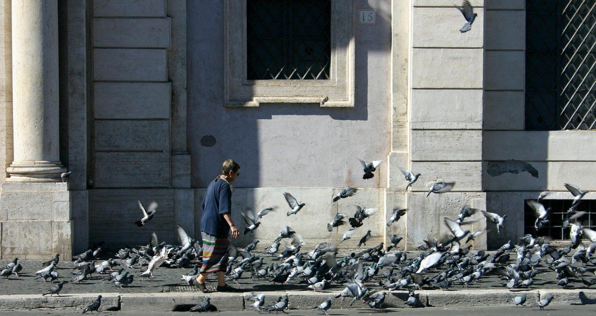 gołębie odchody