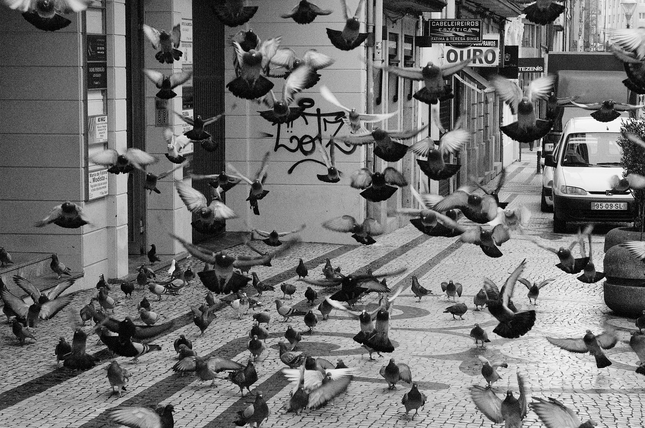 problem z ptakami
